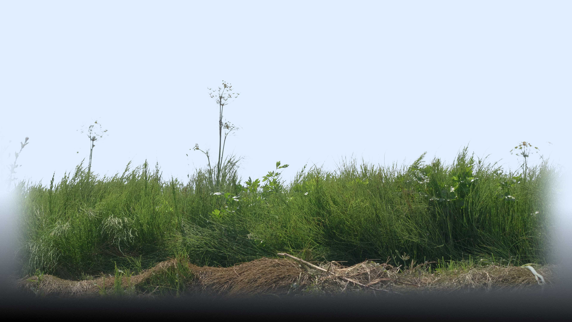 Plants_00053.jpg