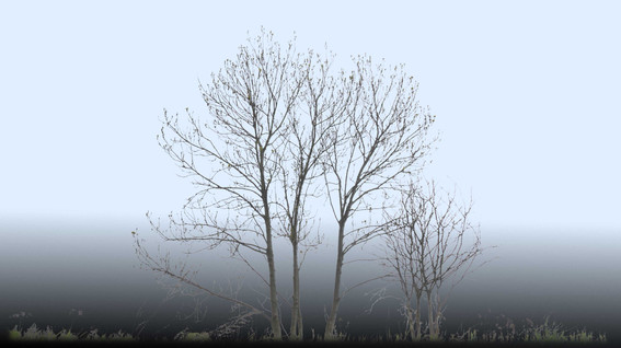 Plants_00084.jpg