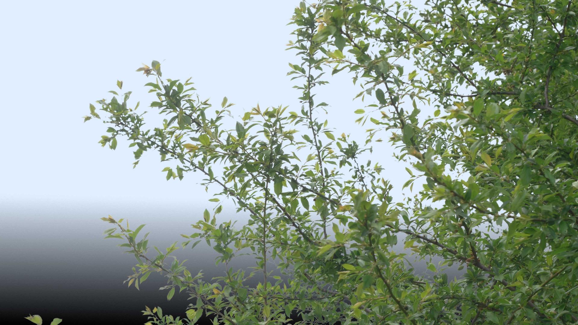 Plants_00056.jpg