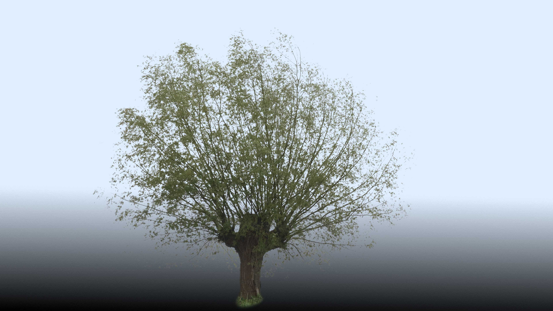 Plants_00090.jpg