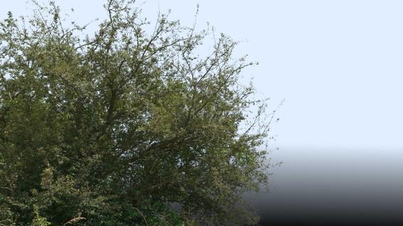 Plants_00062.jpg