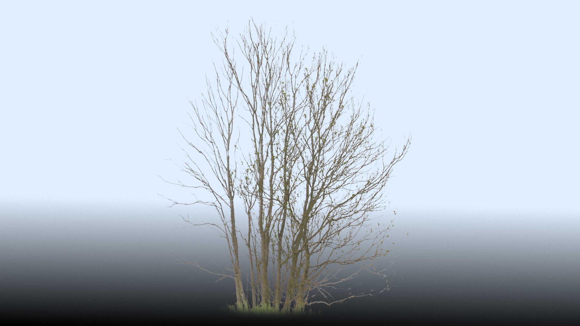 Plants_00085.jpg