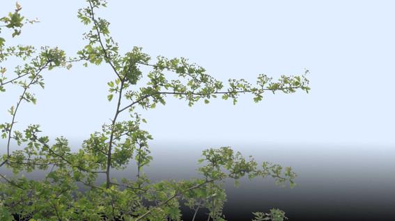 Plants_00058.jpg