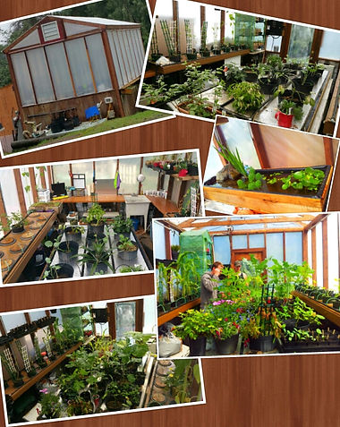 Living planet solutions greenhouse