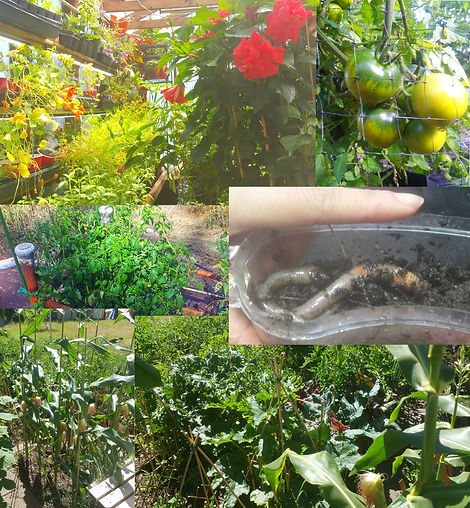 Results of sustainable horticulture