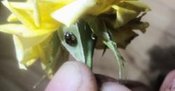Unidentified Ladybug 5