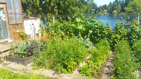 Living planet solutions garden