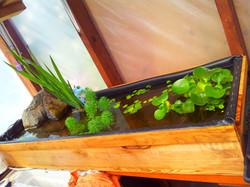 Aquatic garden, check!