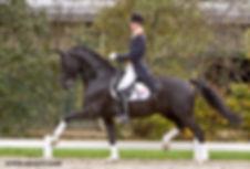 Special D, a Royal Dutch Sport Stallion