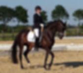 Endelin E, Elite IBOP, KWPN mare at Canadream Farm