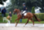 Grace Kelly Sollenburg, Elite IBOP, a Royal Dutch Sport mare from Canadream Farm