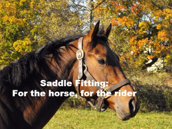 Saddle Fitting: for horse and rider.