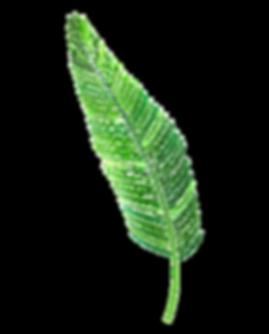 422-4223626_free-png-palm-leaf-png-image