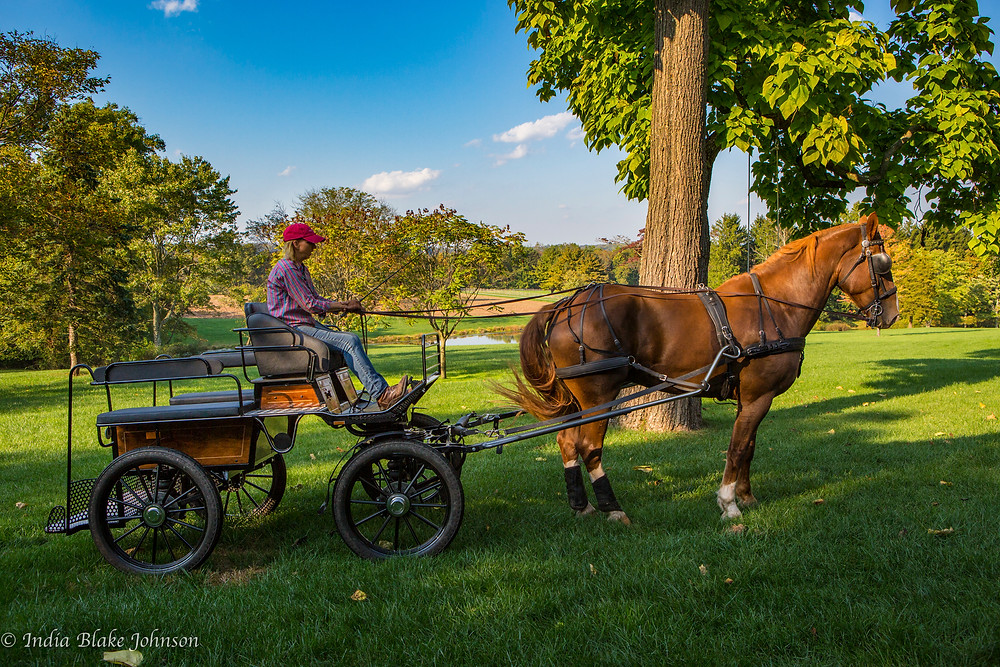 Horse carrying woman on carriage