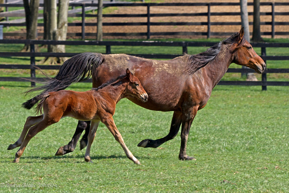 A horse and colt galloping through a stable