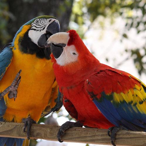 Tender Parrots
