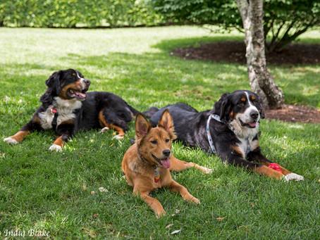 Why Do We Need Pets? Pets Make A House A Home