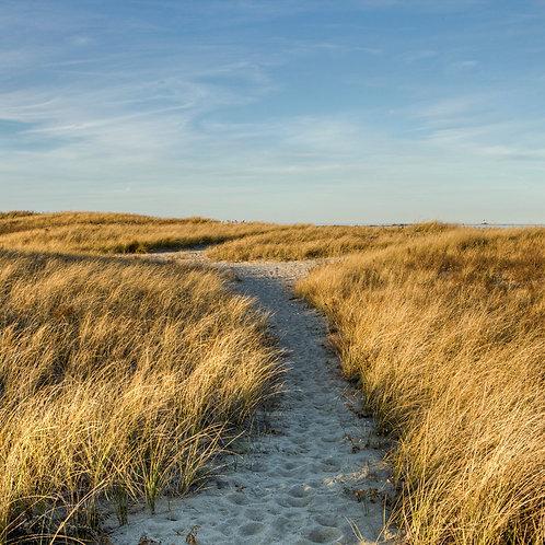 The Sand Path