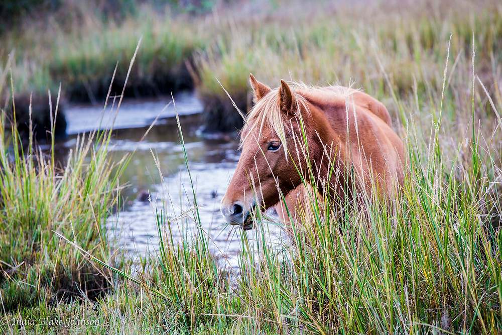 Horse by a river