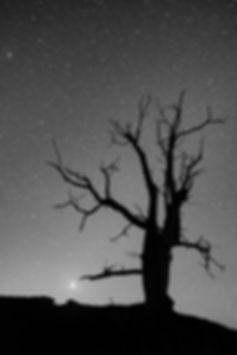 arbre soccia corse nuit vénus astrophoto black white