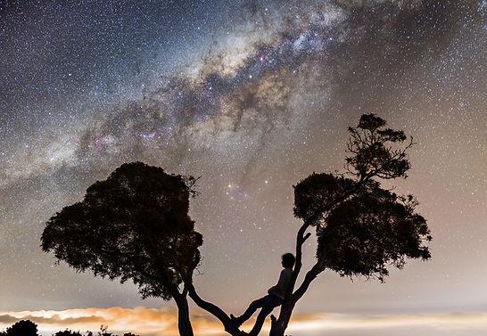 maido la réunion arbre voie lactée milky way portrait tree
