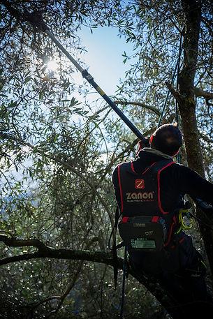 olive olivier corse reportage photographe klape nature prestation agriculture récolte