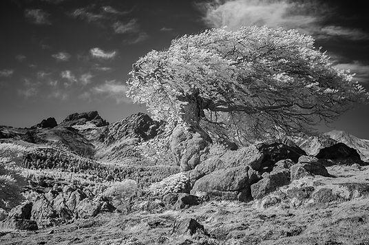 col saint pierre chene corse infrarouge tree infrared klape paglia orba