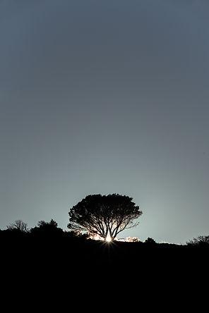 mont puget arbre nature calanque soleil coucher klape