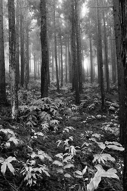 maido foret noir et blanc arbre la réunion klape
