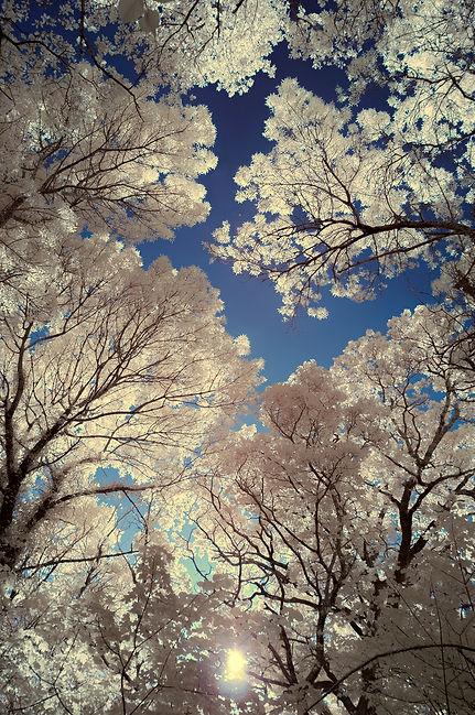 infrarouge klape sainte baume forêt couleurs bertagne 13