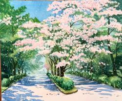 Paint 11