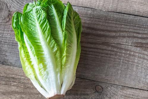 Lettuce, Romain Hearts 3 pack