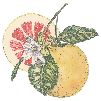 Citric Pomelo.png