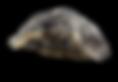 Højby Kro skaldyrsaften østers