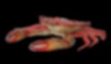 Højby Kro skaldyrsaften krabber