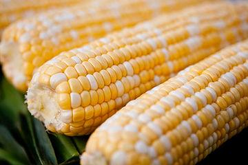 ears of corn.jpg