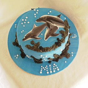 Dolphin edited.jpg