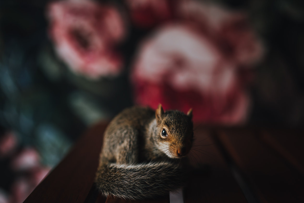 squirrel_studio_april2019 (3 of 4).jpg