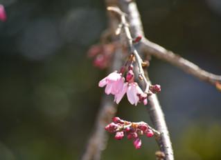不安定な春