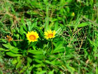 野に咲く花に気づいていますか