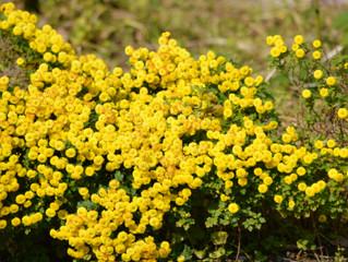 花々とアロマ