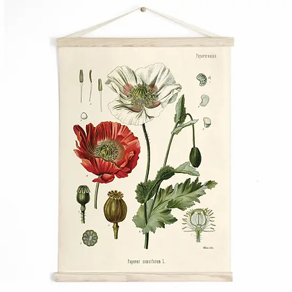 Vintage Botanical Opium Poppy Flower Canvas Hanging Chart