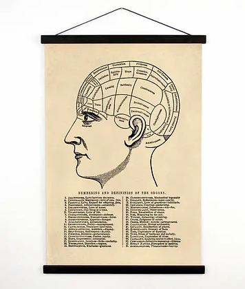 Vintage Anatomy Phrenology Chart Canvas Wall Hanging