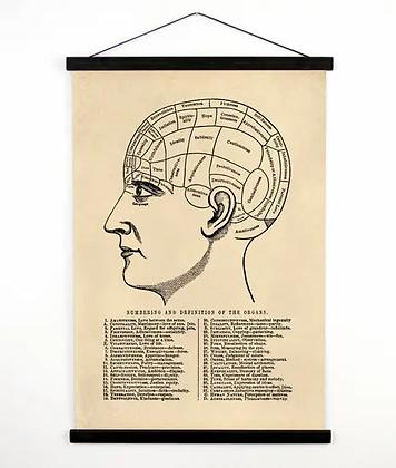 Vintage Anatomy Phrenology Chart Canvas Wall Hanging