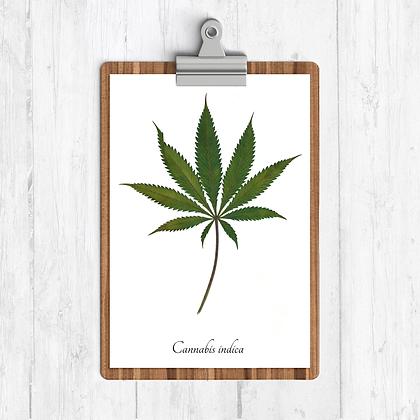 Cannabis Leaf Botanical Print
