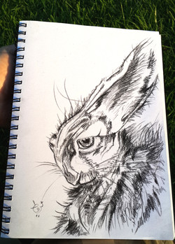 Hare - Sketch