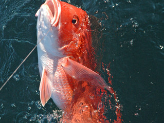 The Red Snapper, A Destin Icon