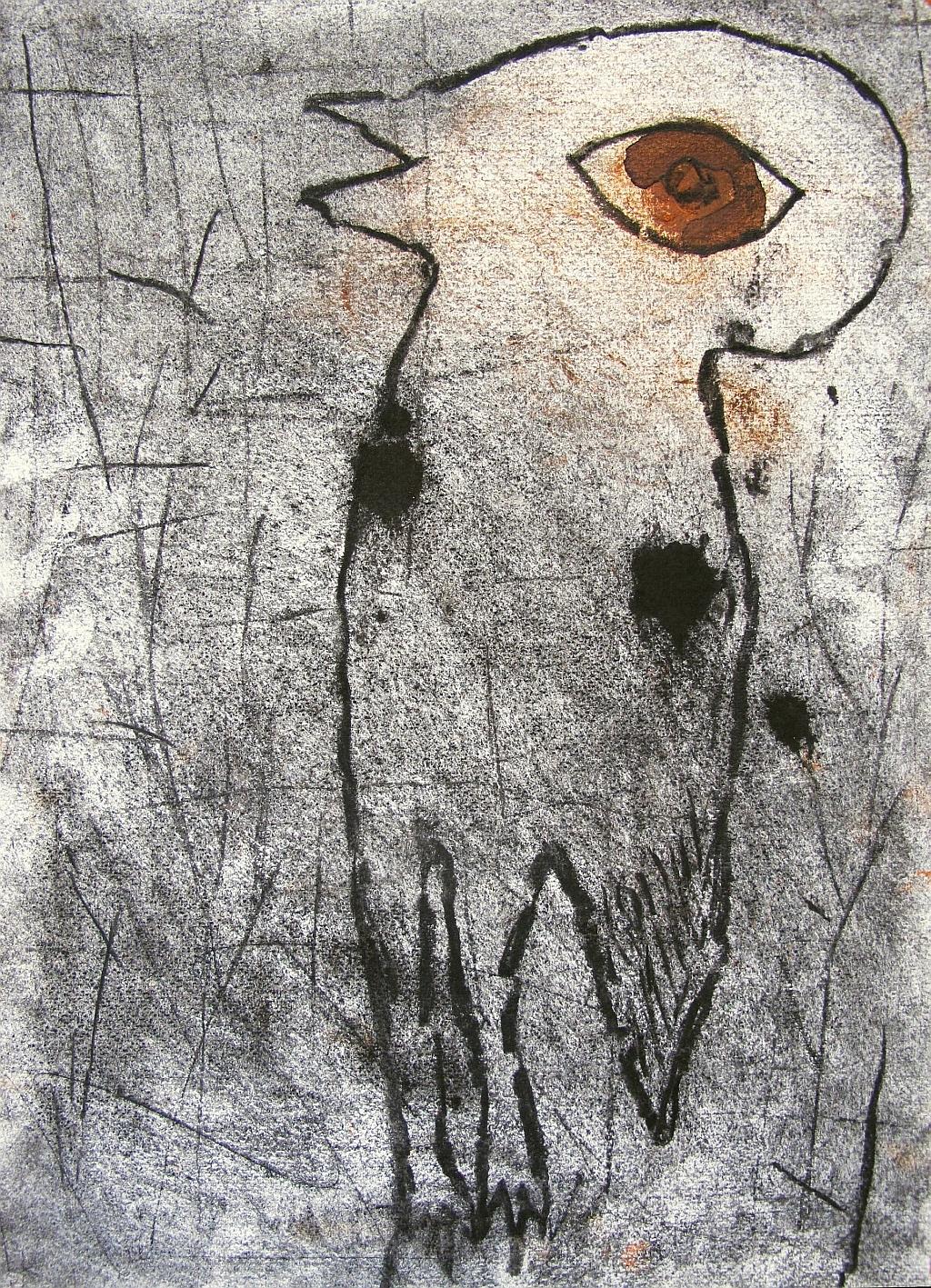 1 bush stone curlew