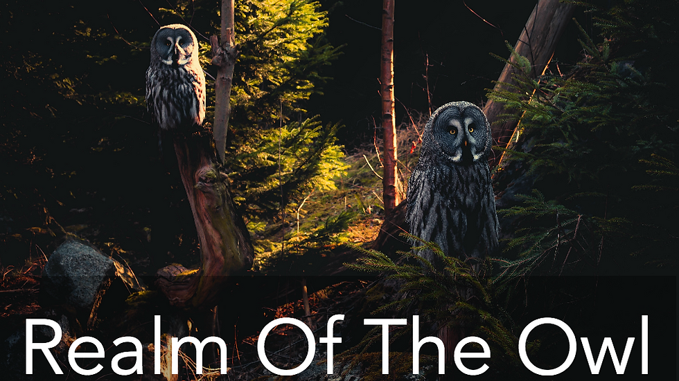 Realm Of The Owl