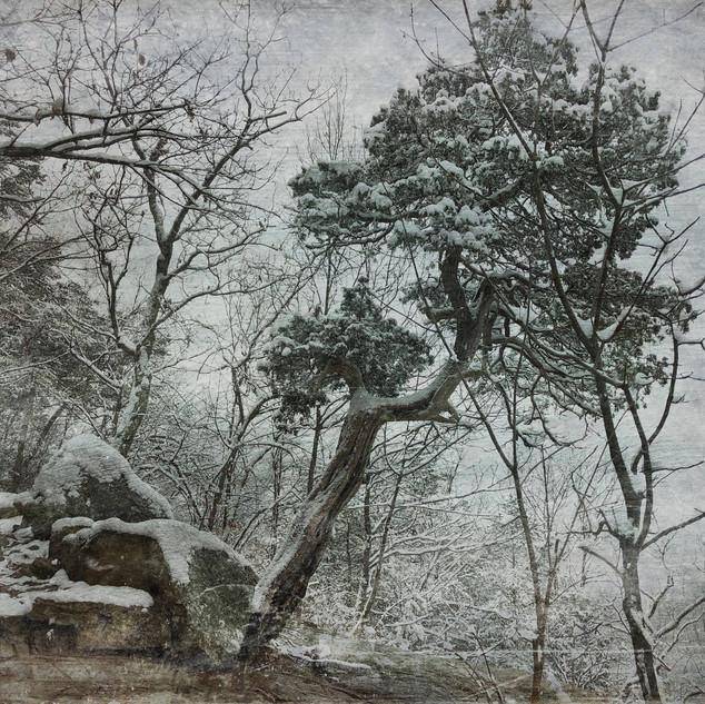 Winter, White Oak Canyon